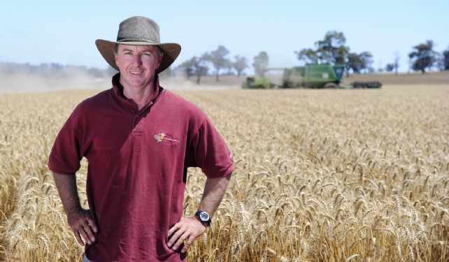Michael Walsh in wheat paddock