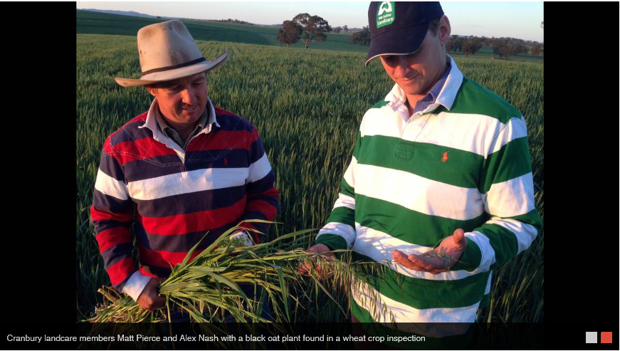 farmers tackling herbicide resistance 2