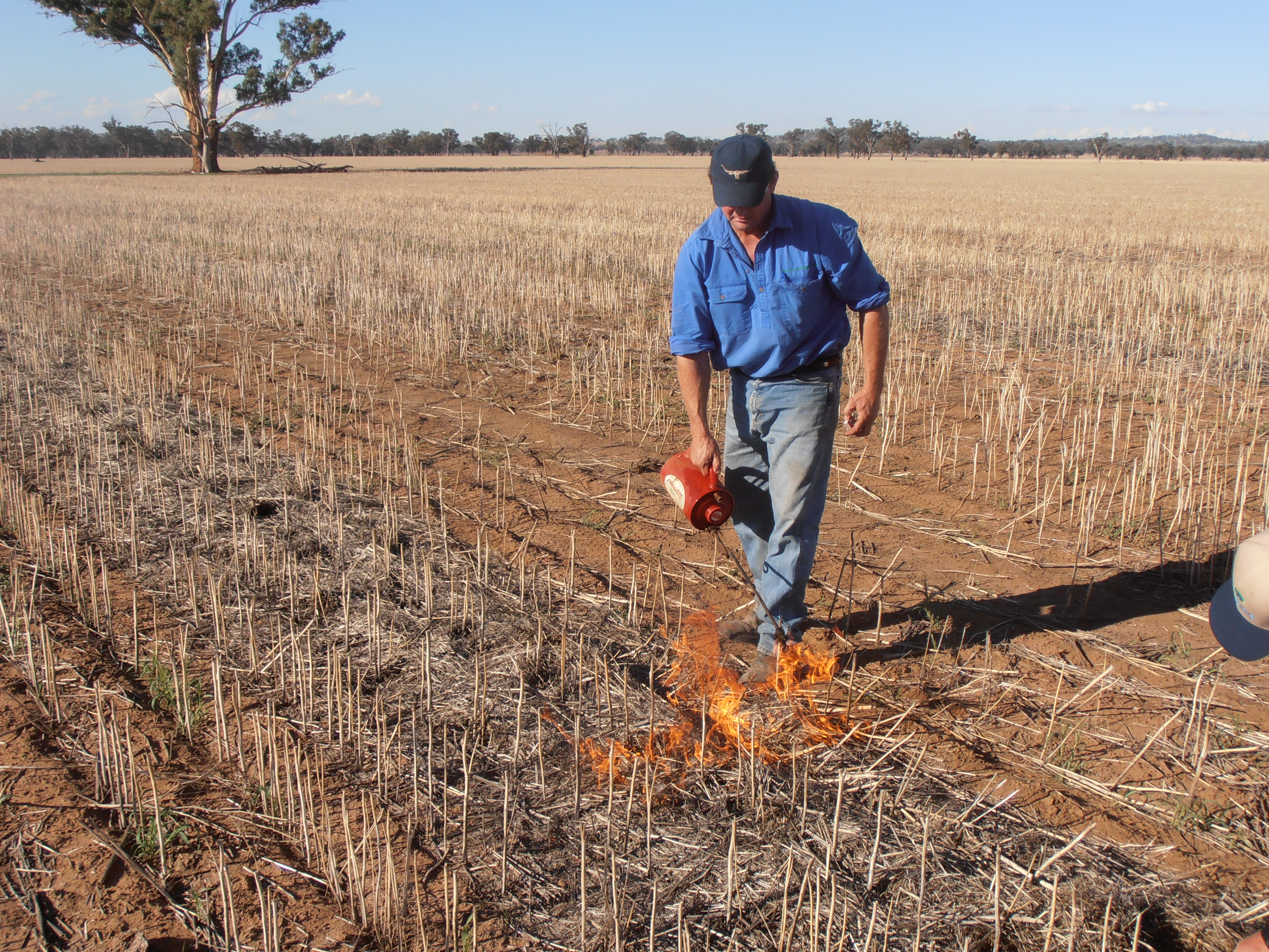 A hot fire is the key to effective narrow windrow burning to kill weed seeds.