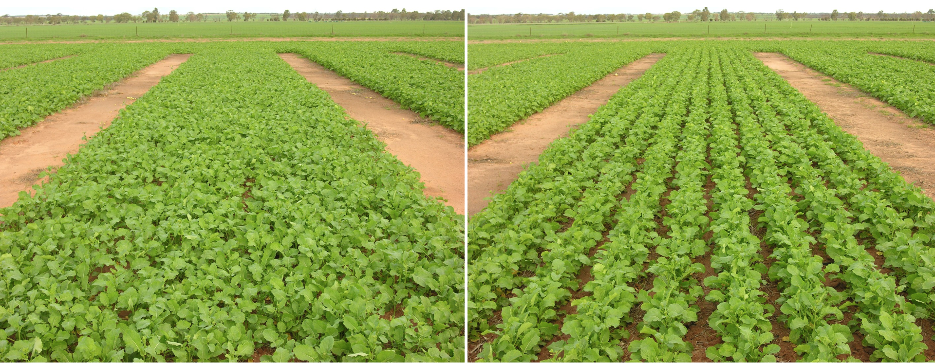 Left: narrow rows. Right: wide rows.