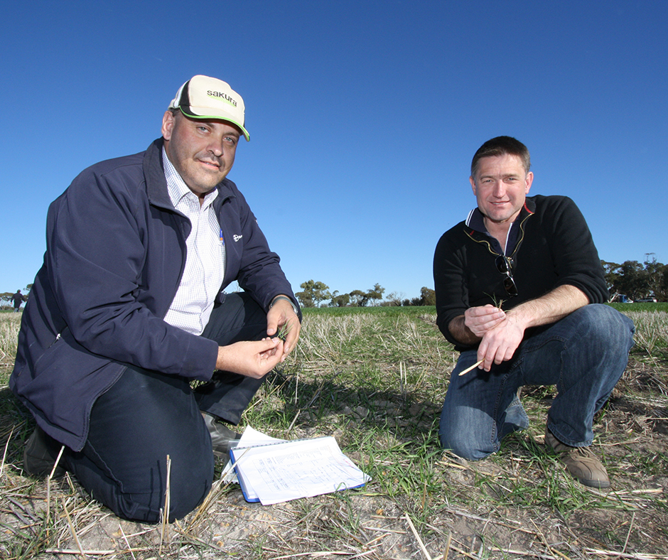 Pictured with Craig White, Bayer Crop Science Technical Advisor and Leader of Integrated Weed Management, Dr David Minkey is determining the decay curves for a range of pre-emergent herbicides under different season conditions.