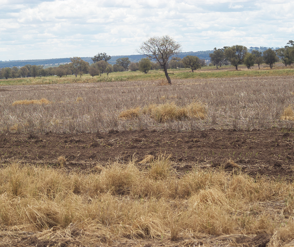 Glyphosate resistance in weeds is becoming widespread across the northern grains region, particularly around the NSW Queensland border, however these resistant weeds are often found in small patches, less than one hectare in size.