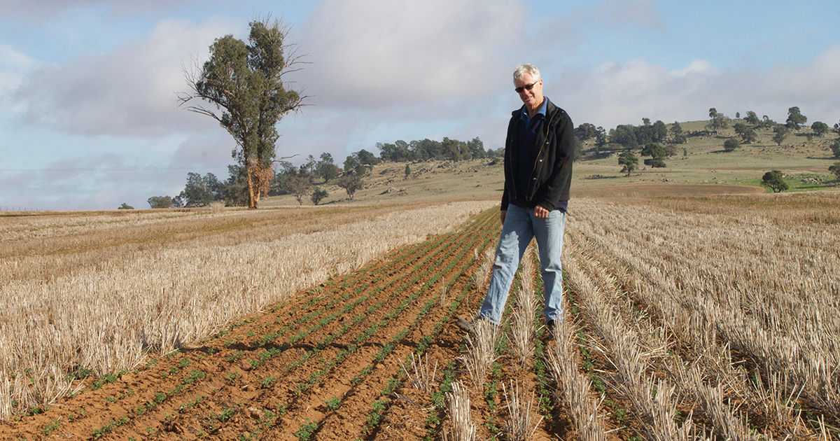 Robert aims to narrow windrow burn about 200–300 ha a year, usually in lupin and canola crops and finds two successive years of windrow burning in a paddock is very effective in driving down weed numbers.
