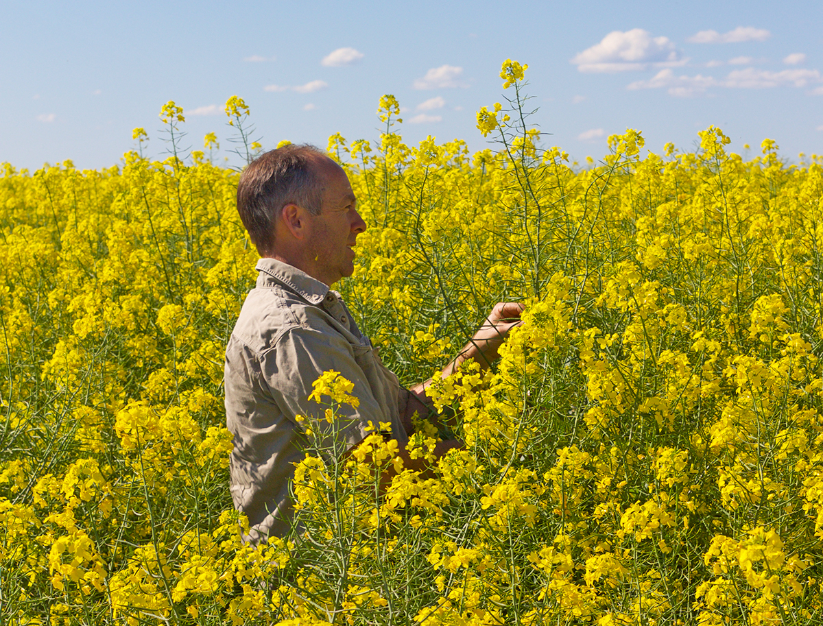 Canola plays an important part in the Fels' weed management program. In the 2-year canola phase they implement strong crop competition, a broad range of different herbicide MOA, windrow early to collect as much weed seed as possible, concentrate the weed seed to a narrow line and burn the windrow in year 2, just to be sure!
